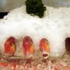 台北のレストランでの魚の陳列